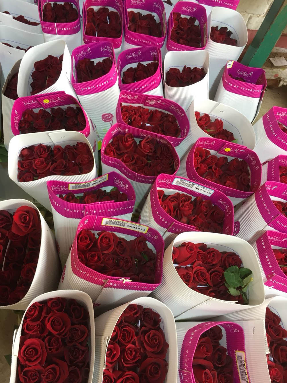 Omex_Roses_Ecuador.jpg